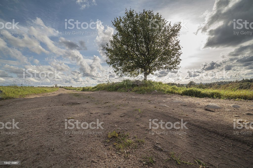 Autumn road on an oblique field with one tree royalty-free stock photo