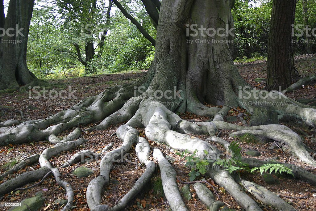 Autumn Roots 2 royalty-free stock photo