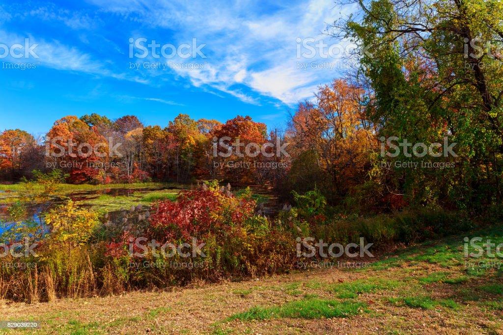 Autumn rural landscape - autumn oak trees near the pond stock photo