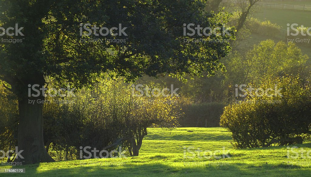 Autumn rural sun lit scene. stock photo