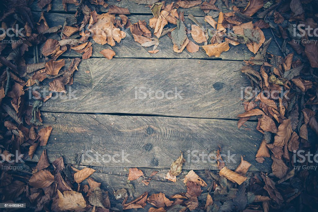 Autumn Rustic Wood Frame Background with Fall Leaves stock photo