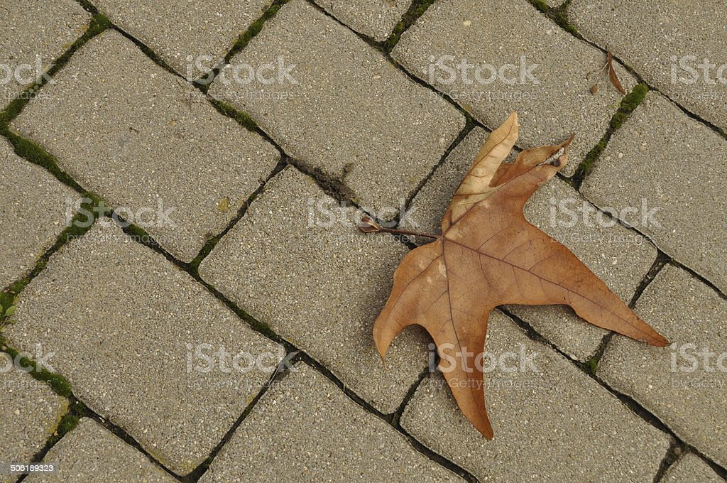 autumn rusty leaf on a brick road royalty-free stock photo