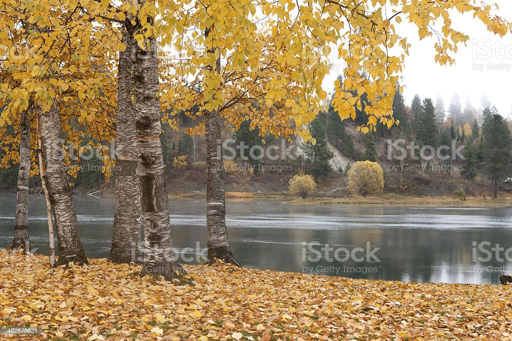 Autumn scene by river. stock photo