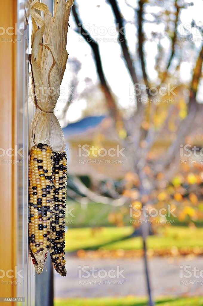 Autumn scene. Decorative corn hanging on the open front doors. stock photo