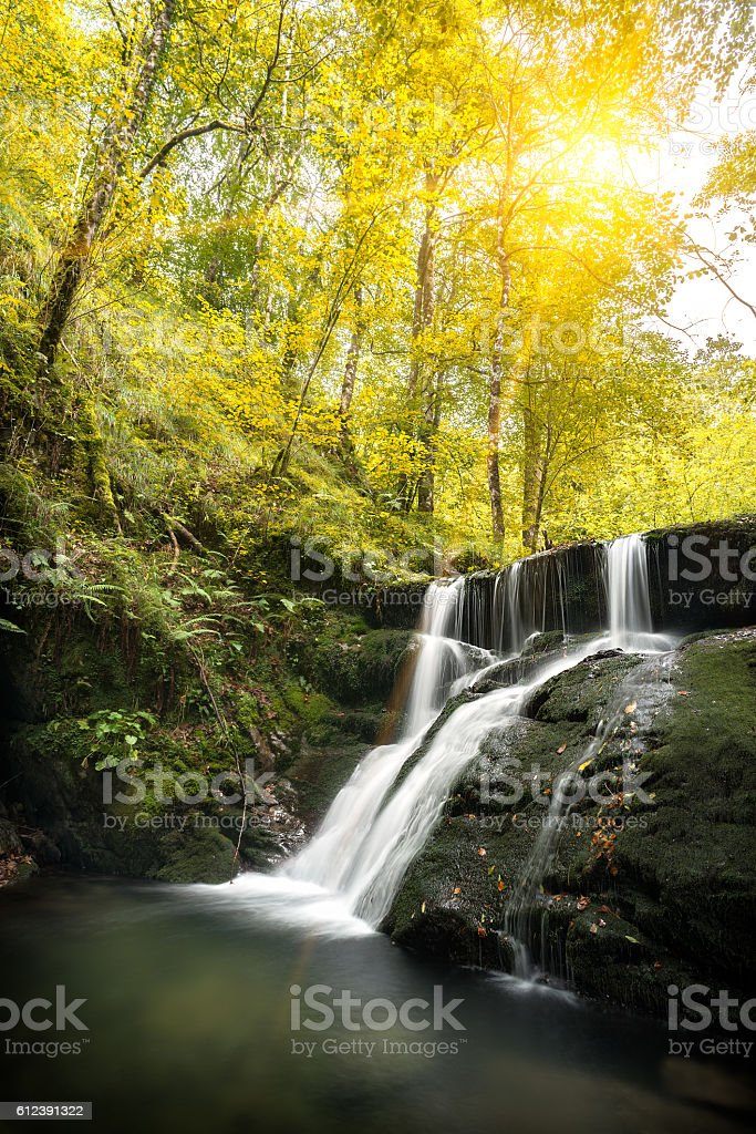 Autumn scene in a forest with a flowing river stock photo