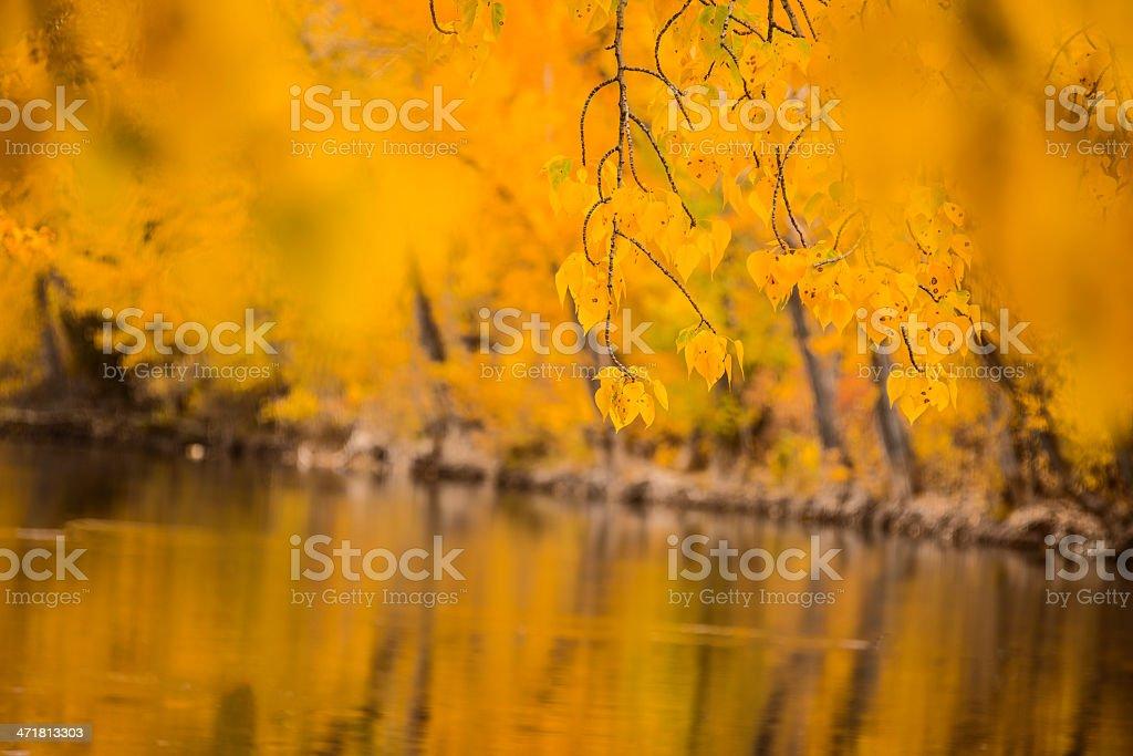 Autumn scene in Boise, Idaho royalty-free stock photo