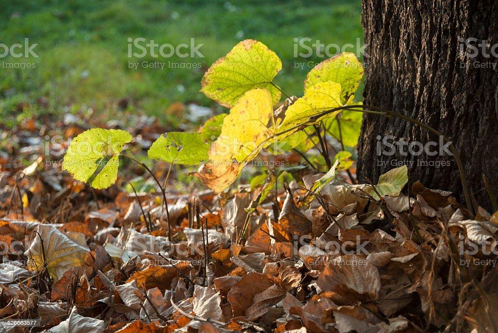 Autumn scene in park stock photo