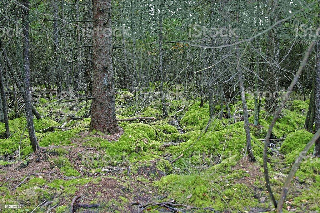 autumn scene of a bog stock photo