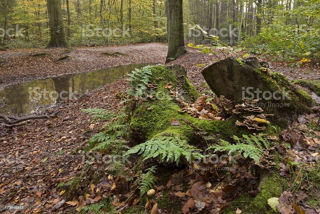 Autumn Scene royalty-free stock photo