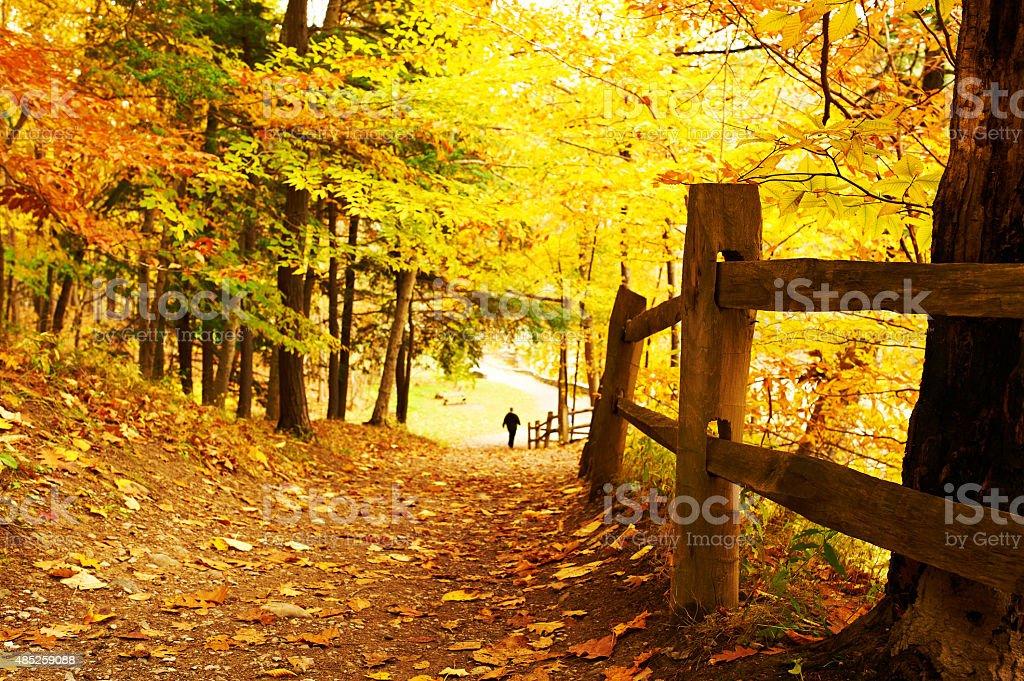 Autumn scene stock photo