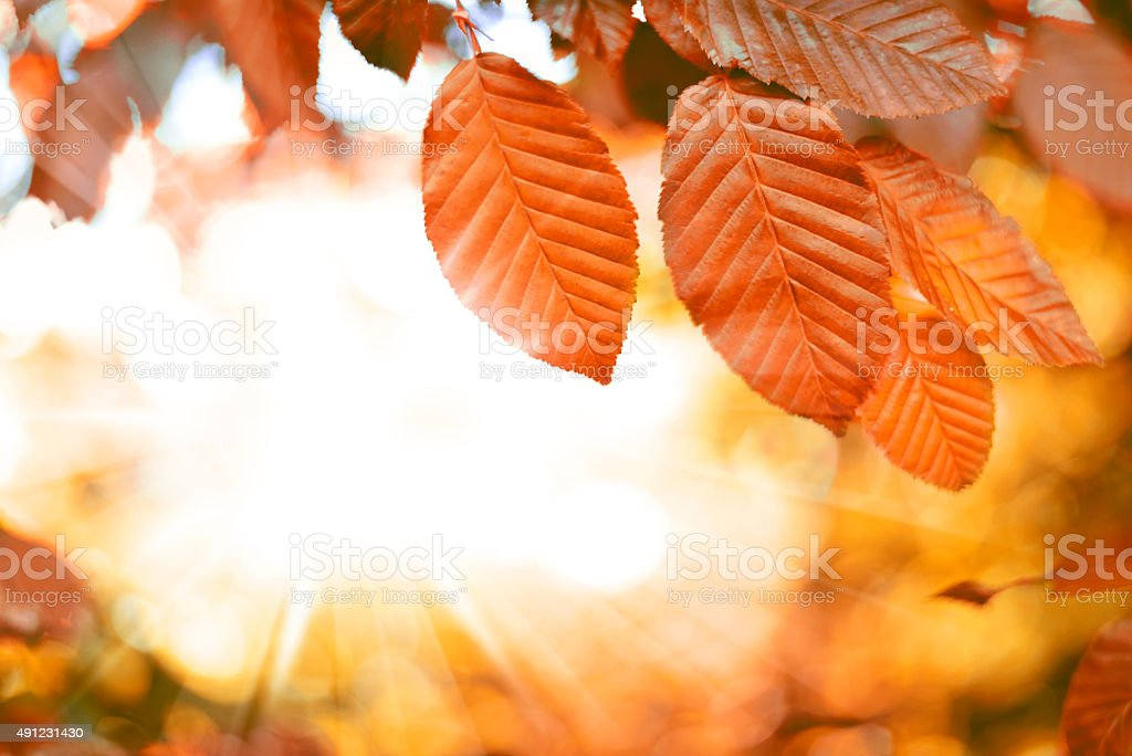 Autumn scene stock photo
