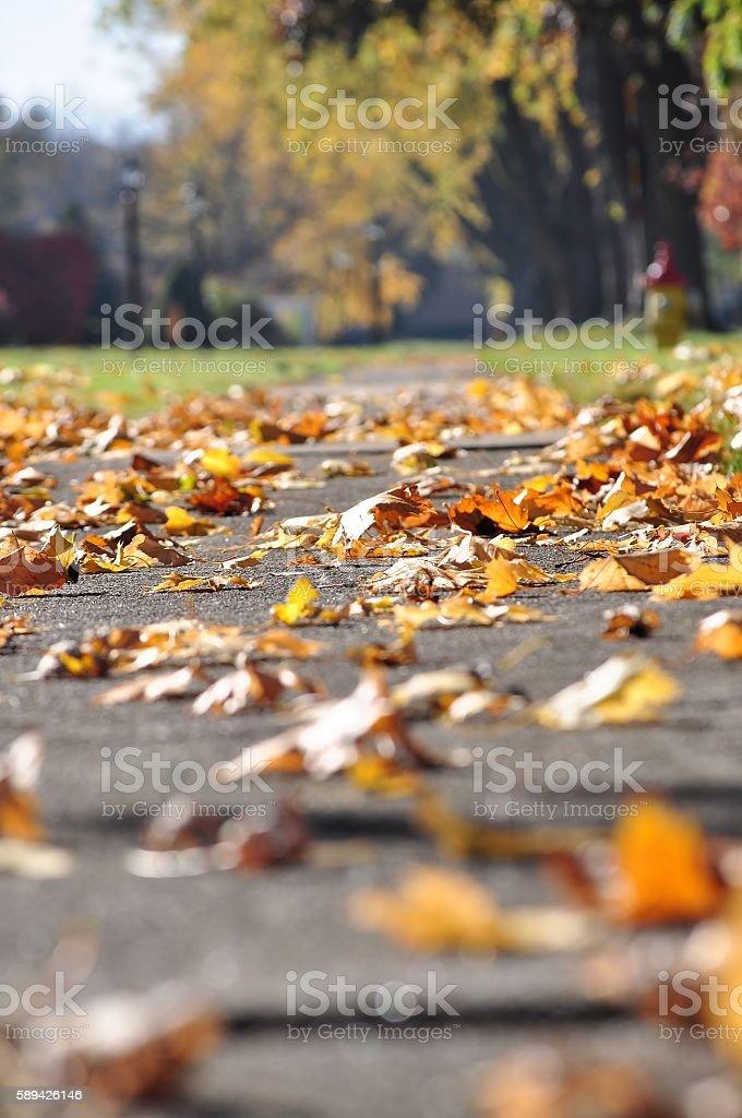 Autumn scene. stock photo