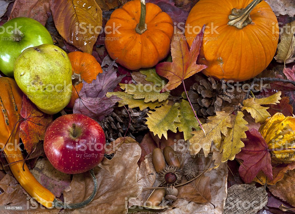 Autumn scene with pumpkins royalty-free stock photo