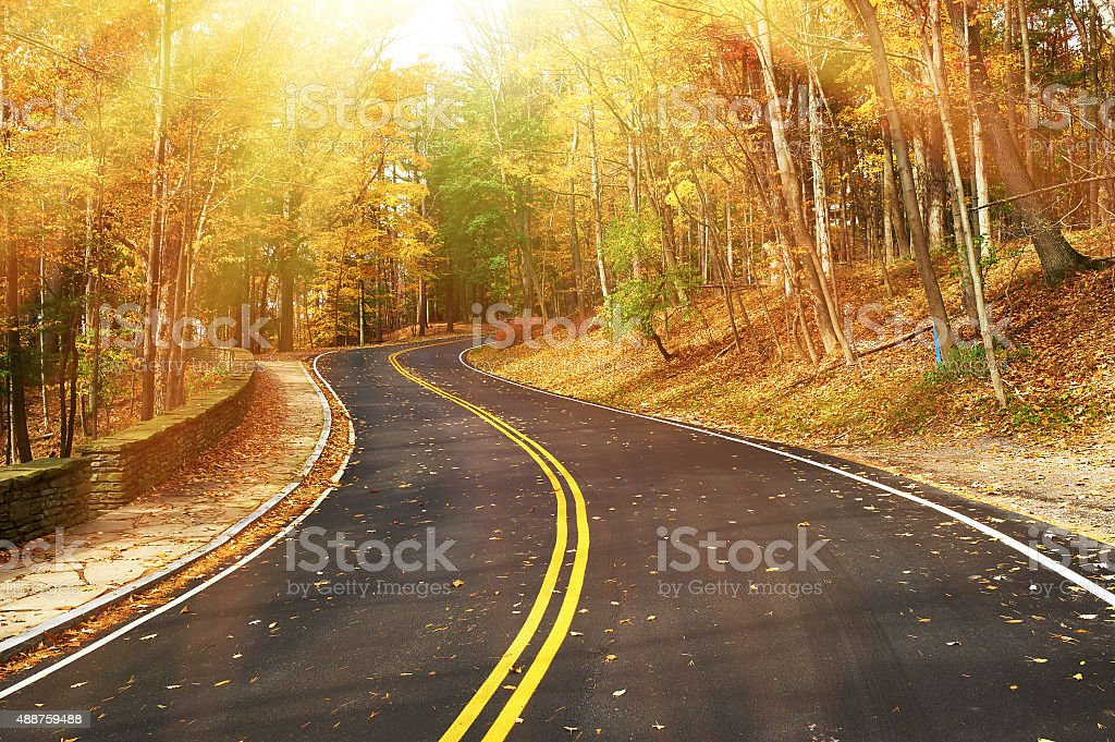 Autumn scene with road in forest stock photo
