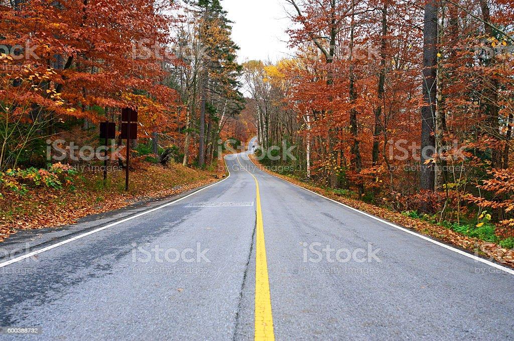 Autumn scene with road stock photo