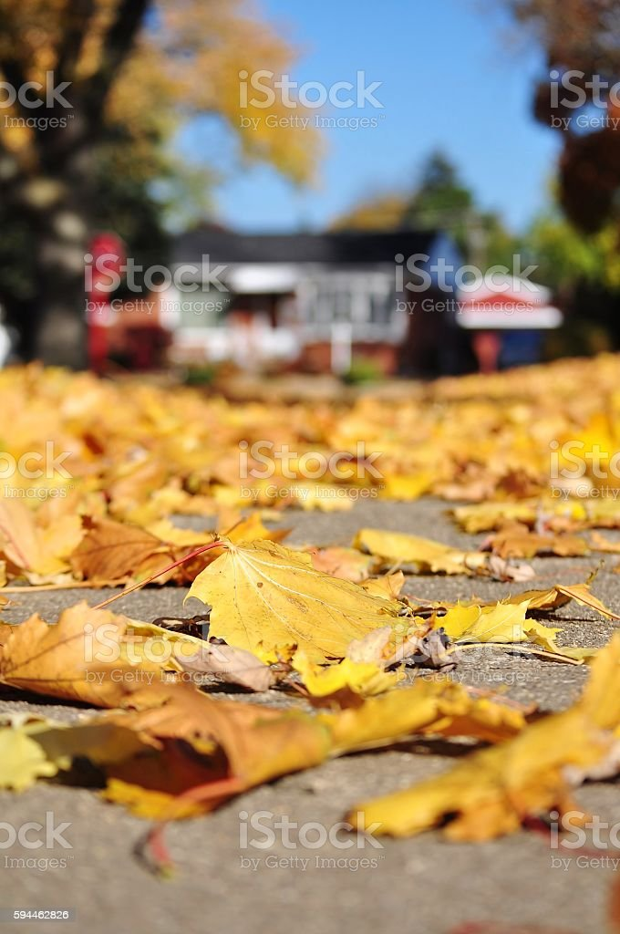 Autumn scene. Yellow leaves and house in the background. stock photo