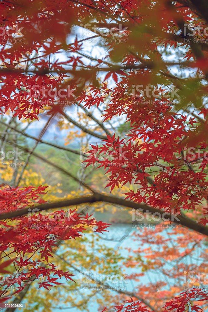 Autumn scenery of the lake shore stock photo