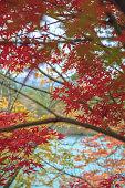 Autumn scenery of the lake shore