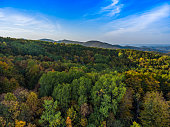 Autumn scenery of the mountain forest.