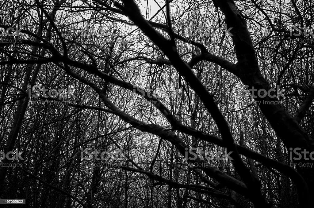 Autumn Scenery - Tree Black and White stock photo