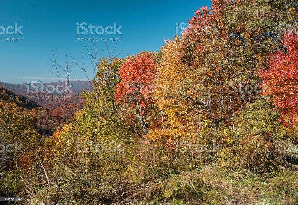 Autumn Scenic View royalty-free stock photo