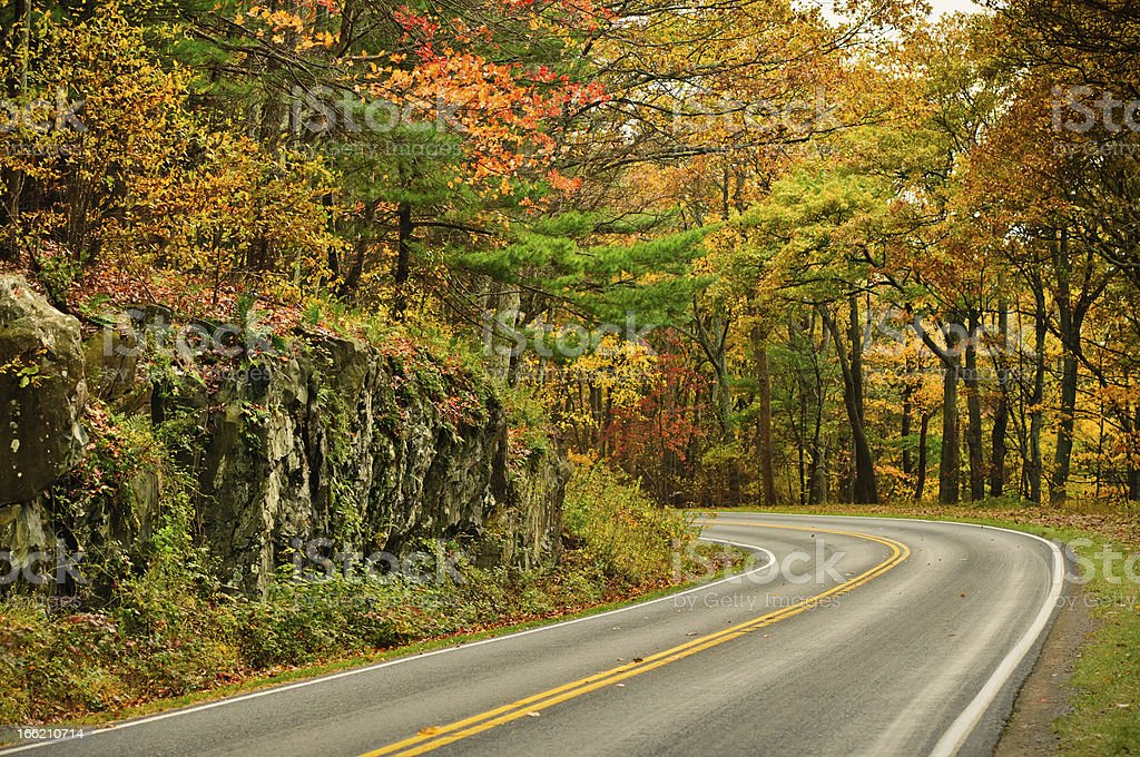 Autumn S-Curved Road stock photo