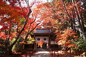 Autumn season of Komyoji Temple in Kyoto, JAPAN.