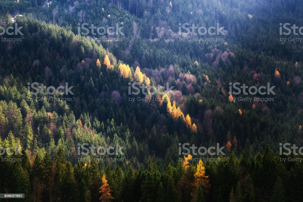 Autumn season theme. Detail of coloured forest. Garmisch Partenkirchen, Bavaria, Germany stock photo