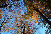 Autumn seen from bottom to top