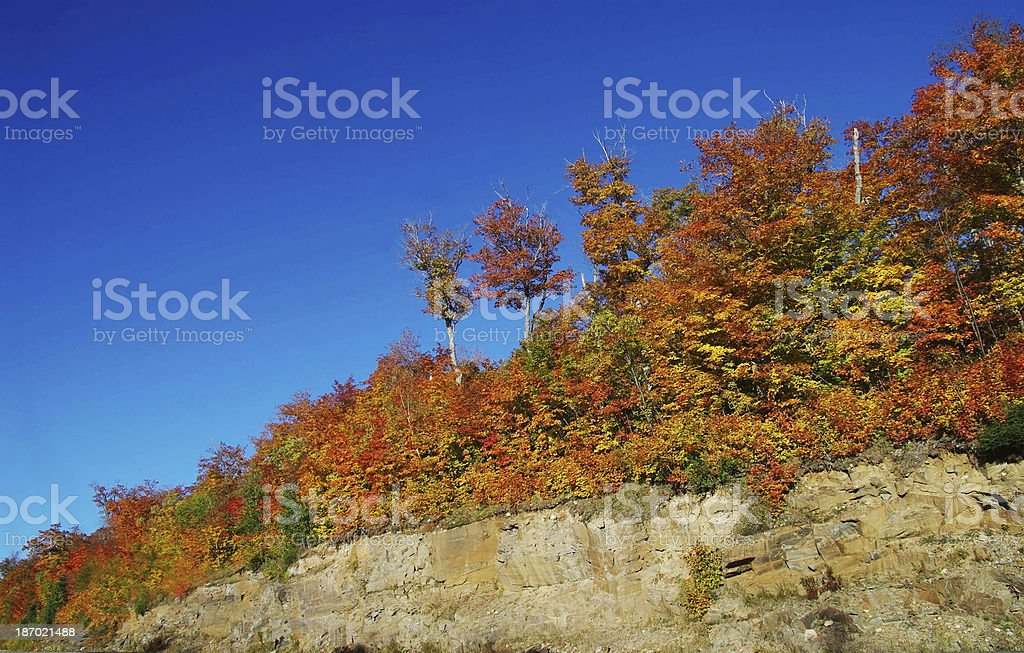 Autumn setting in Algonquin Park royalty-free stock photo
