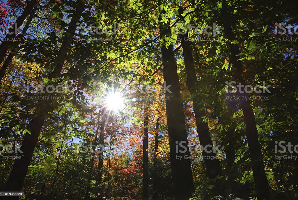Autumn setting in Canada royalty-free stock photo