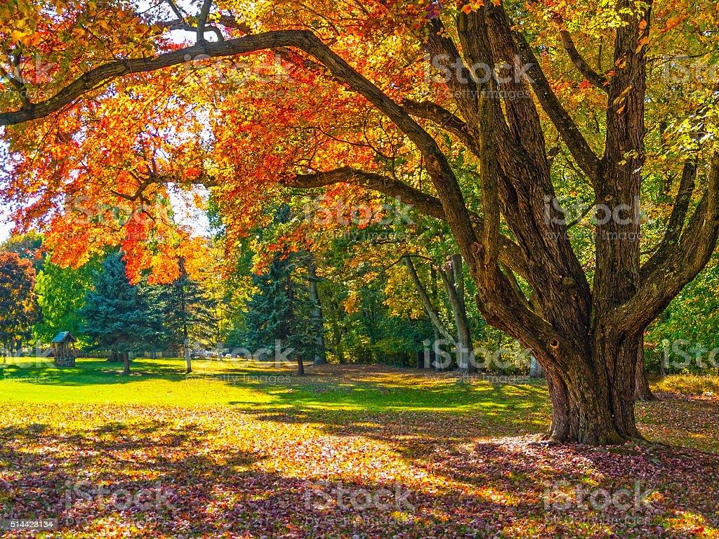 Autumn Shade Tree stock photo