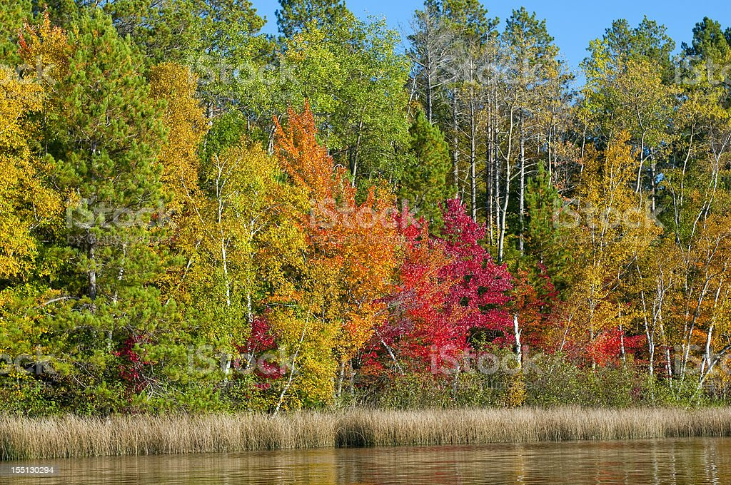 Autumn Shoreline royalty-free stock photo