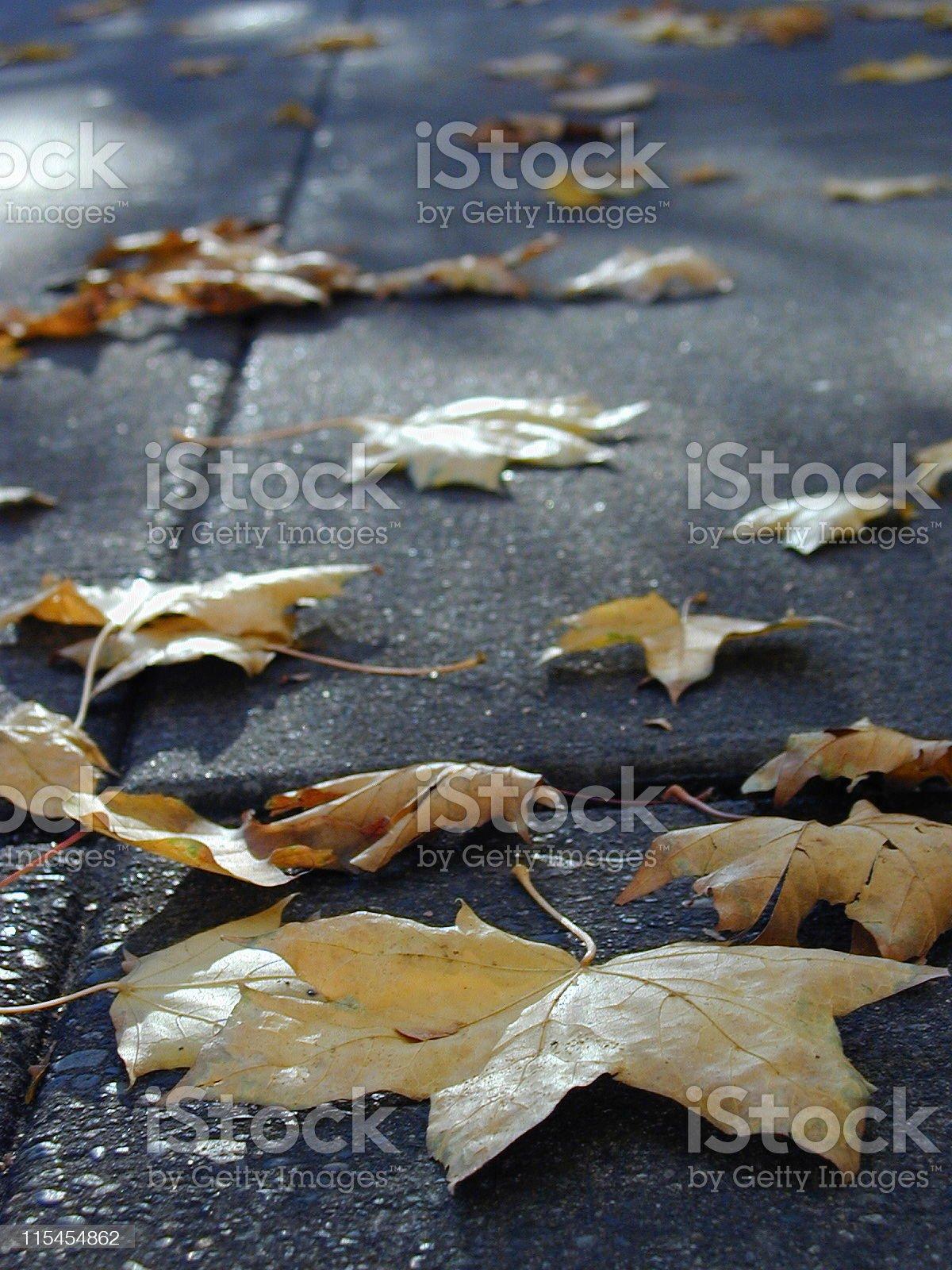 Autumn Sidewalk royalty-free stock photo