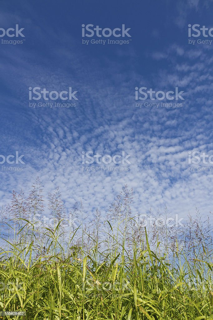 Autumn sky and the grass royalty-free stock photo