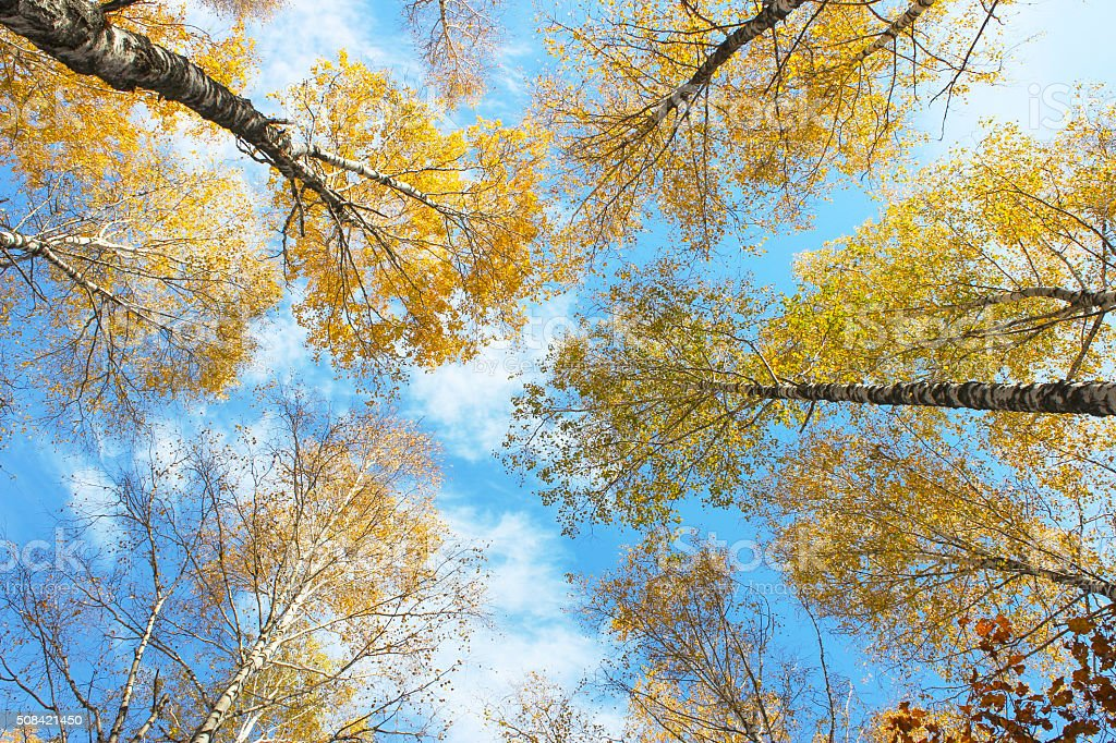 Autumn sky stock photo