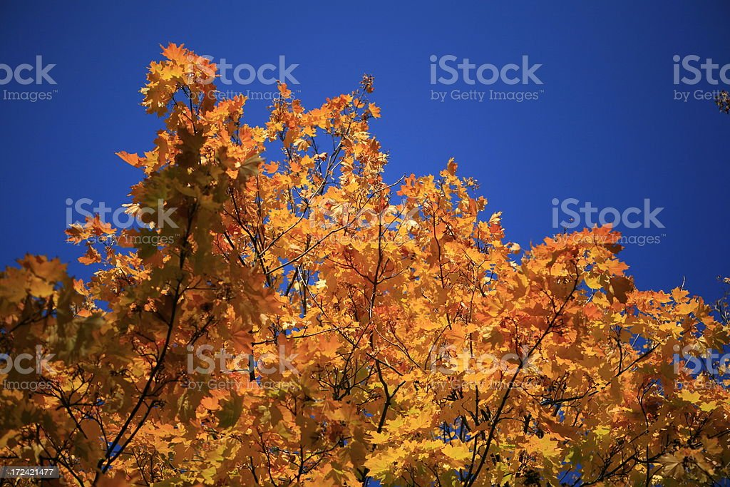 autumn sky with leafs royalty-free stock photo