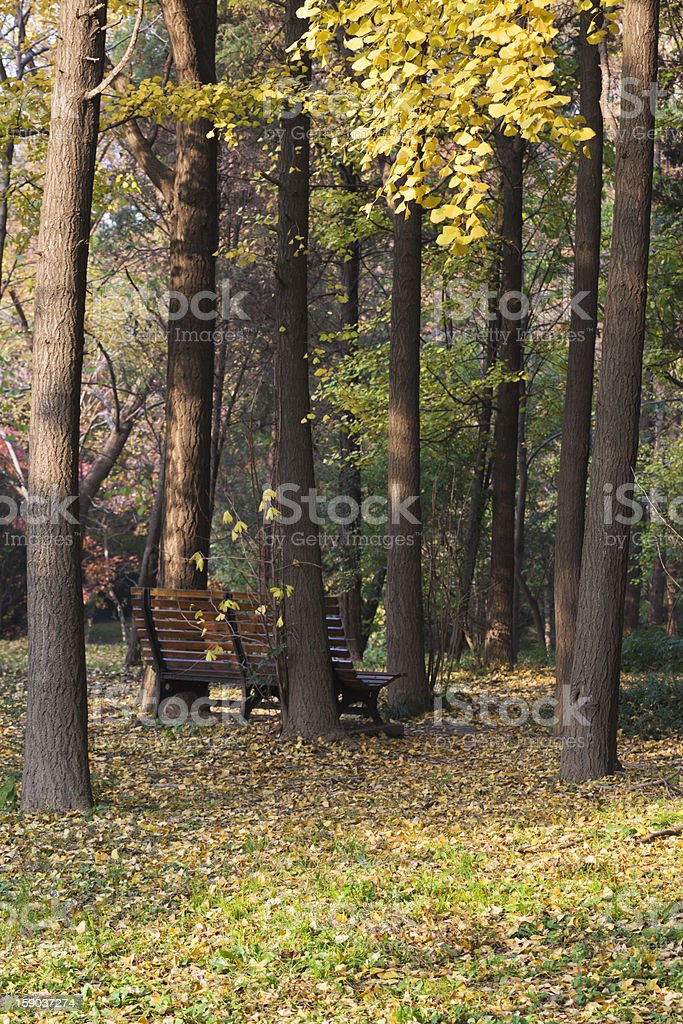 Autumn small forest royalty-free stock photo