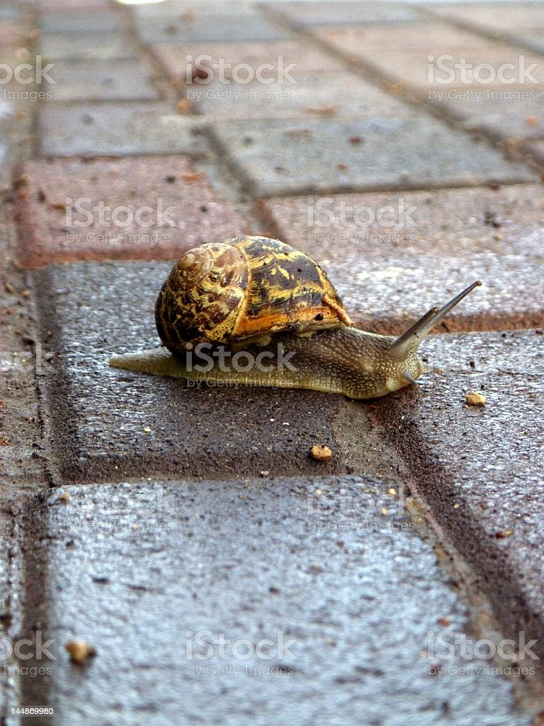 Autumn Snail gets out after it rains. royalty-free stock photo