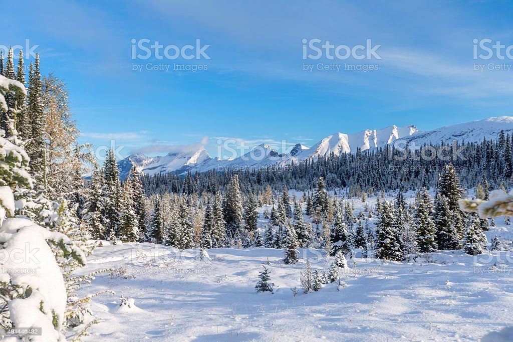 Autumn Snow Covering  Pine Tree Woods Forest Landscape, Canada stock photo