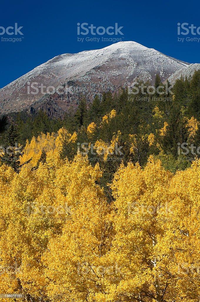 Autumn Snowfall royalty-free stock photo