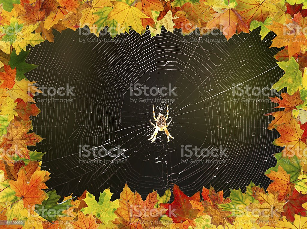 Autumn spider royalty-free stock photo