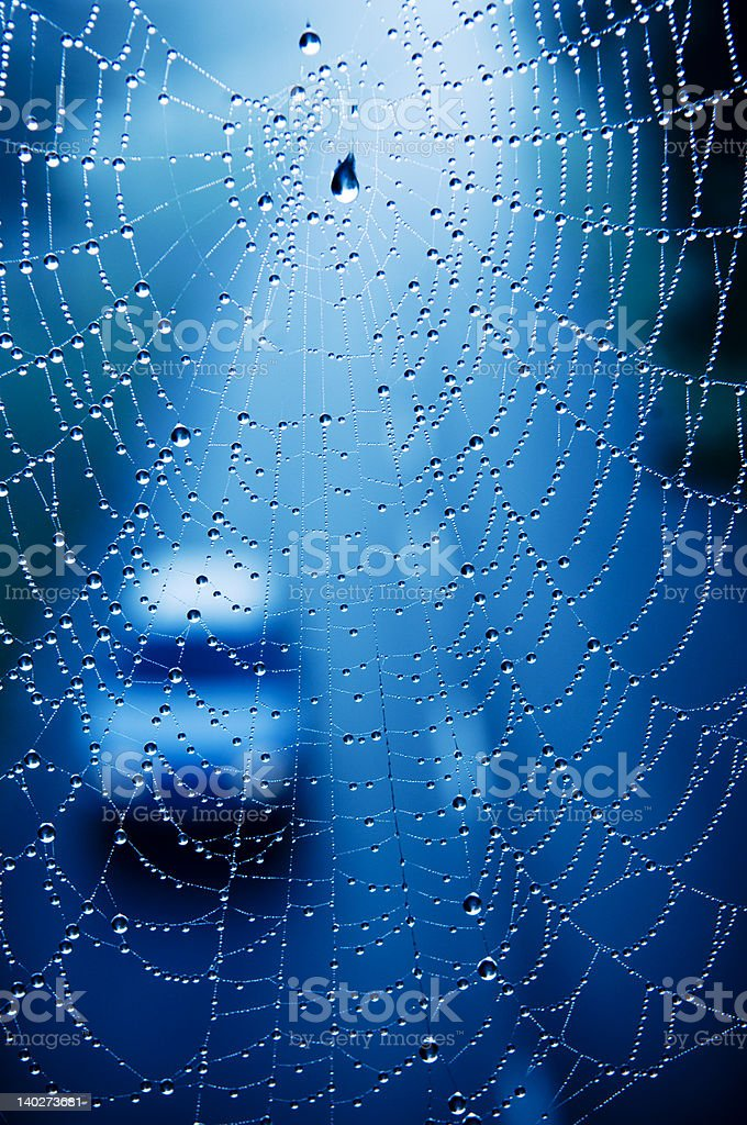 Autumn spider web and passing car stock photo