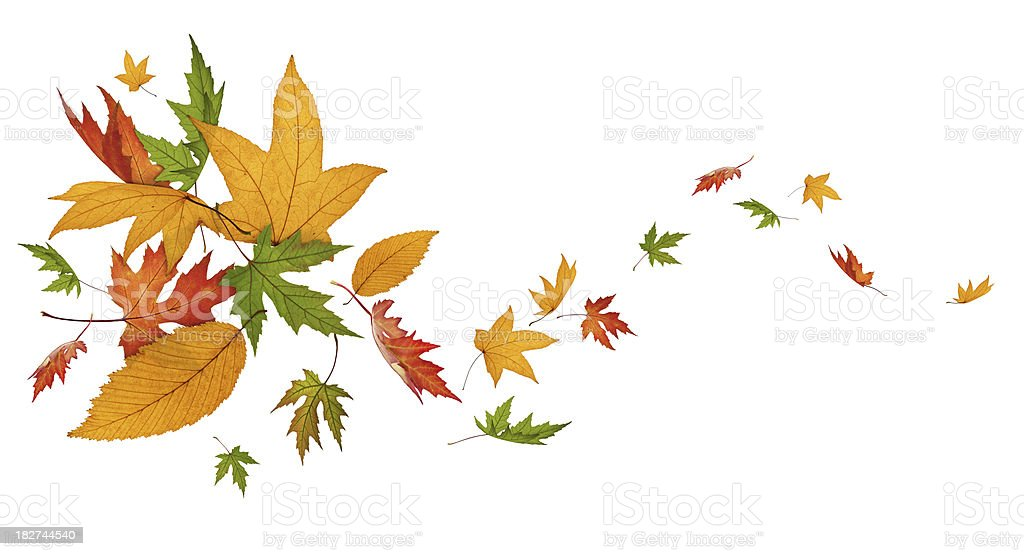 Autumn Spinning royalty-free stock photo