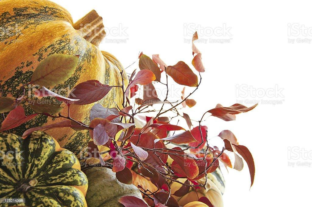 Autumn Squash and Pumpkin royalty-free stock photo