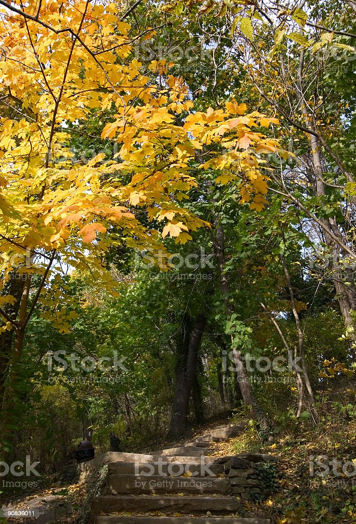 autumn stairs in park stock photo