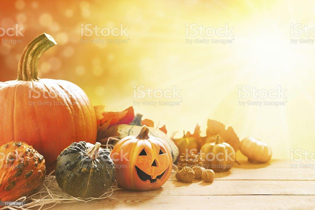 Autumn still life in bright sunlight stock photo
