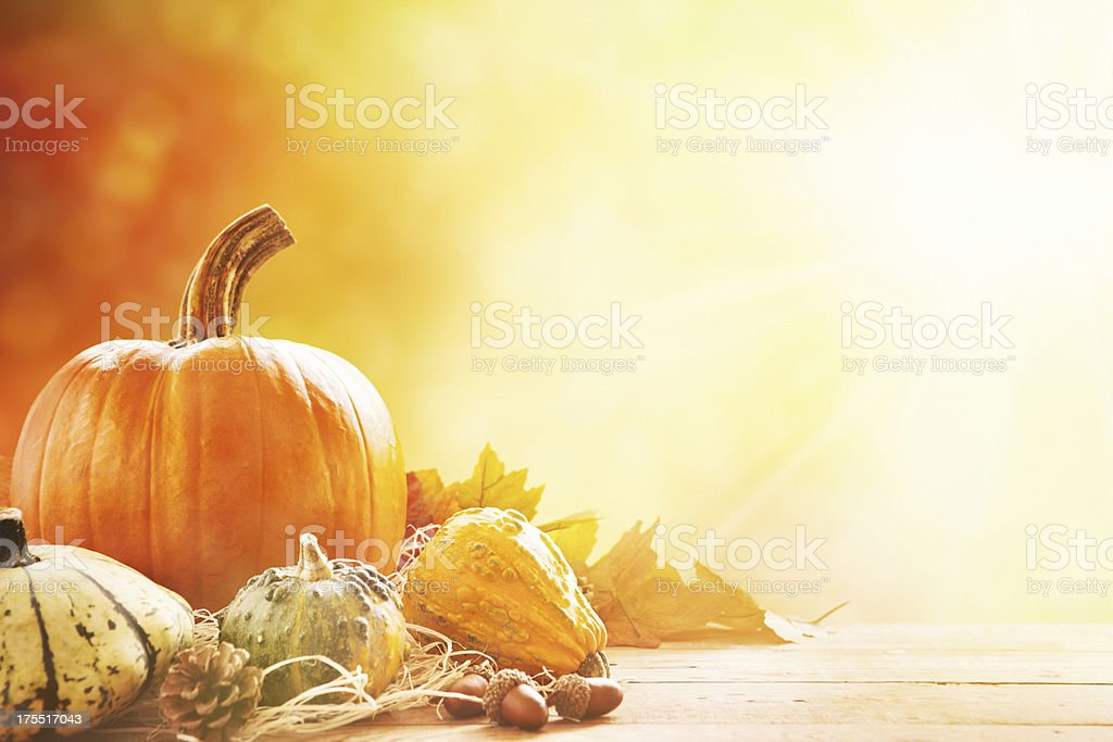 Autumn still life in bright sunlight stock photo