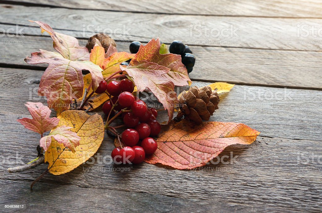 Autumn still life. Leaves and berries foto de stock royalty-free