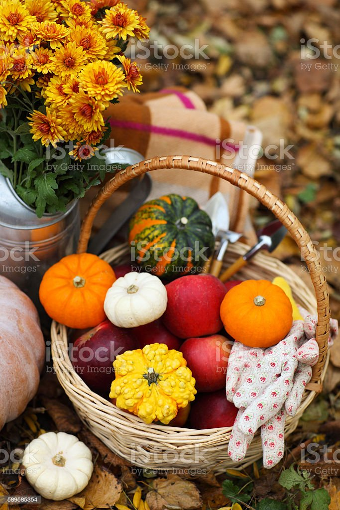 Autumn still life with different pumpkins stock photo